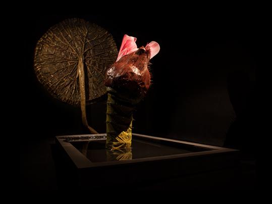 Jättenäckrosen – Victoria amazonica av  Ingela Ihrman.