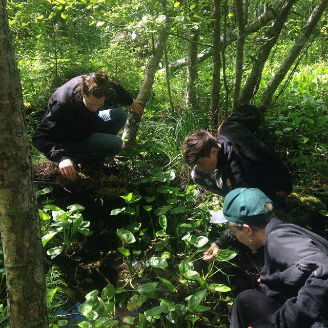 Hägerstens Botaniska Trädgård undersöker ett lokalt träsk i Gnesta. Foto: Norna Molin