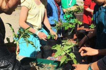 Odla din egen Saqbatomat – Workshop under Tusen trädgårdar